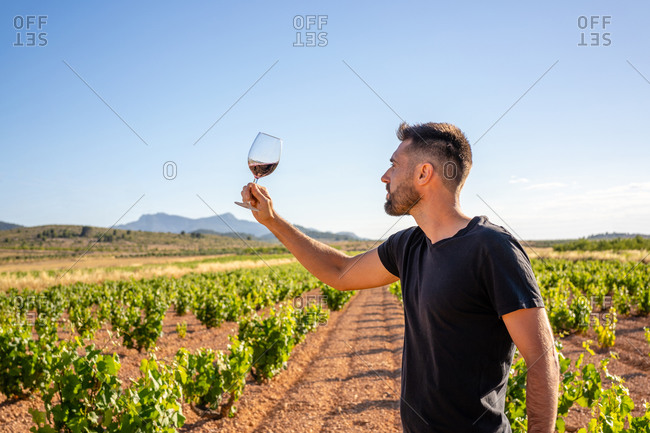 Side view focused young winemaker in casual black shirt raising hand with glass of red wine and checking quality while working on sunny plantation