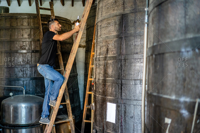 Side view full length positive male winemaker in jeans and black shirt with bottle of wine climbing on big wooden barrel by using ladder