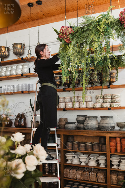 Side view of female florist standing on ladder and arranging composition of green decorative hanging plants while working in cozy floristry salon