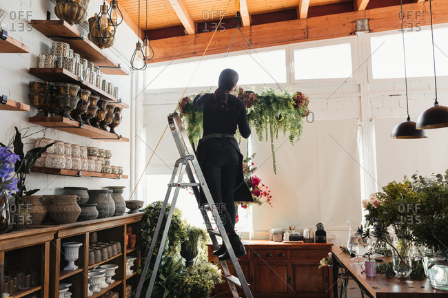 Back view of unrecognizable female florist standing on ladder and arranging composition of green decorative hanging plants while working in cozy floristry salon