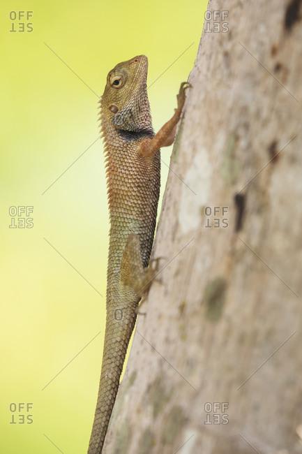 Closeup side view of lizard walking on brown tree in park