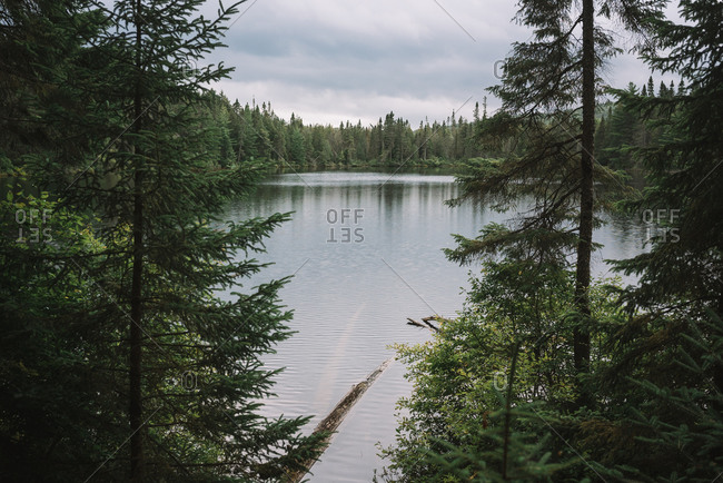 Picturesque landscape of calm lake surrounded by green coniferous trees in cloudy day in Algonquin Provincial Park in Canada