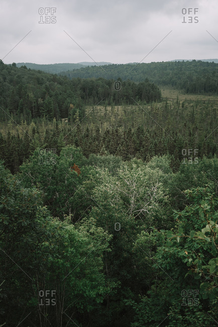 From above natural landscape with lush green bushes and tall trees in Algonquin Provincial Park in Canada