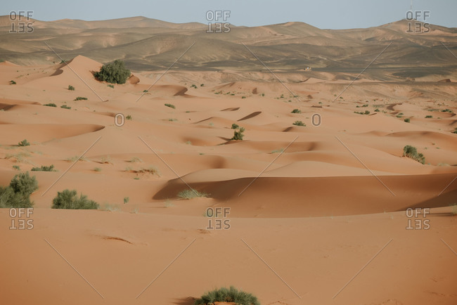 African desert landscape with high sandy dunes and few plants under cloudy sky in morocco