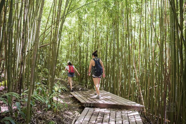 Hikers in bamboo forest, Waipipi Trail, Maui, Hawaii