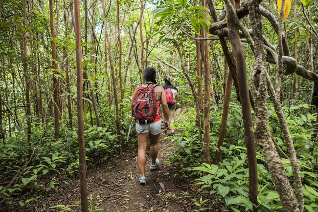 Hikers walking in rainforest, Iao Valley, Maui, Hawaii