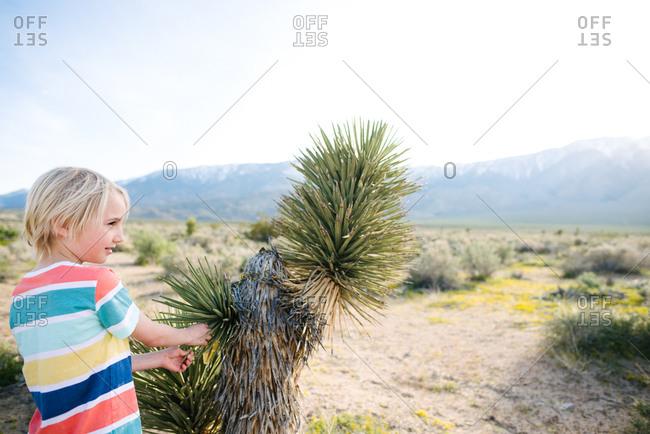 Boy beside Joshua tree, Olancho, California, US
