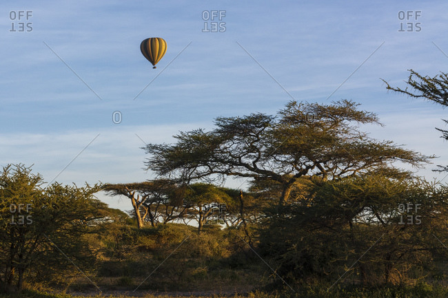 Hot air balloon in flight over acacias, Ndutu, Ngorongoro Conservation Area, Serengeti, Tanzania