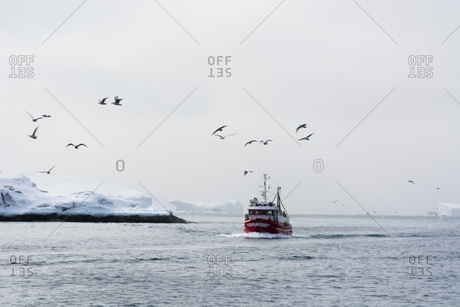 Seagulls flying past above passenger ferry sailing in ocean, Ilulissat, Greenland
