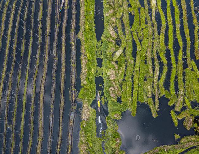 Myanmar- Shan State- Nyaungshwe Township- Aerial view of floating gardens on Inle Lake