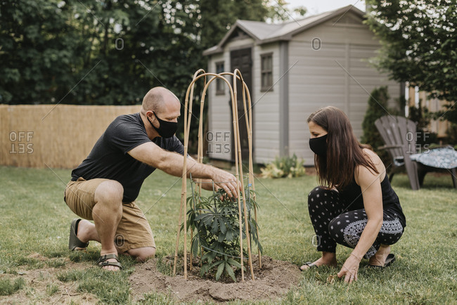 Couple wearing masks examining plant in yard