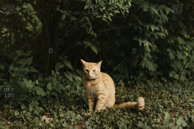 Cat sitting on land against plants in yard