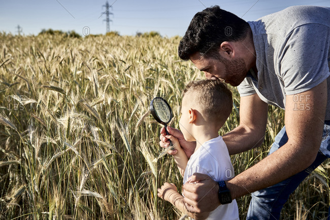 Father and son examining crops with magnifying glass in agricultural field