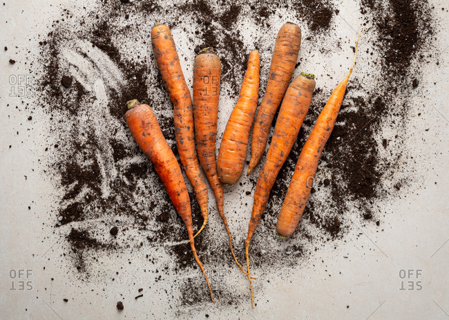 Overhead view of fresh carrots and soil on light surface