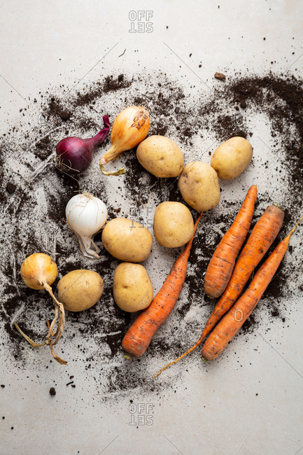 Organic autumn root vegetables and soil on light surface