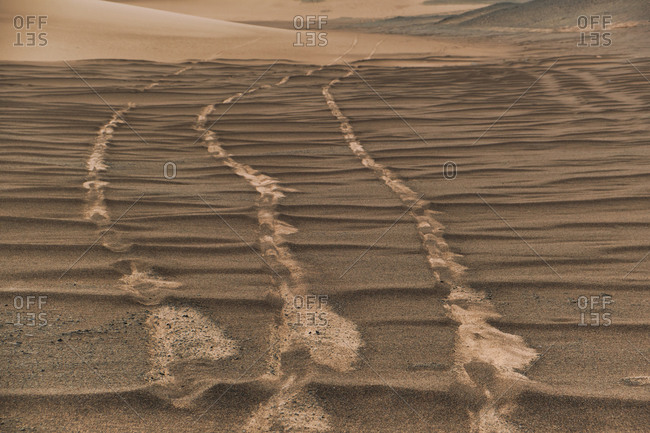Scenery view of desert with sandy dunes with shabby surface with wheel marks