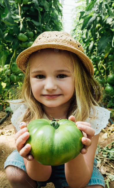 From above of cheerful little child in straw hat demonstrating big unripe tomato while squatting near overgrown tomato shrubs in hothouse and looking at camera