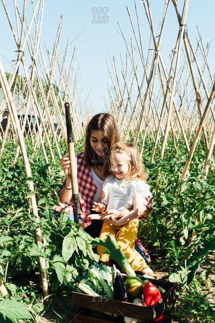 Happy woman cuddling little girl while collecting fresh vegetables and sitting with box between lush green tomato bushes and wooden sticks under blue sky
