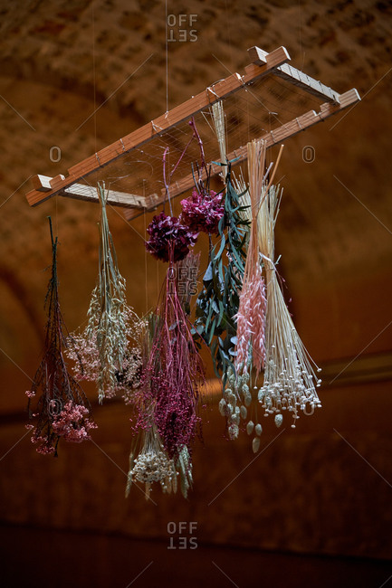 Colorful assorted flowers hanging and drying under ceiling in shabby house with brick walls