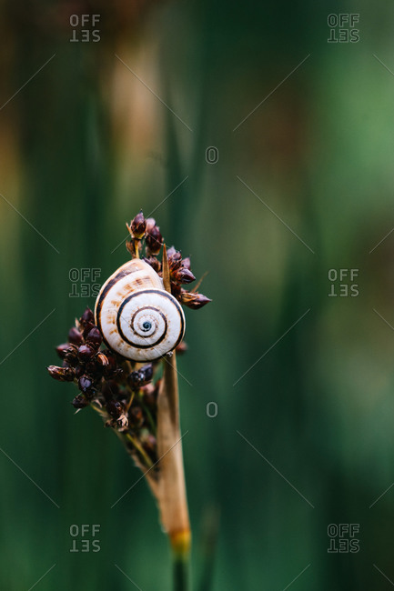 Small white and brown snail crawling on stalk of flower against blurred backdrop of summer garden
