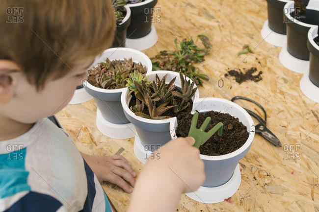From above crop unrecognizable child in casual wear using plastic garden fork while loosening ground in pots with cacti standing behind blooming flowers and hedge in sunlight
