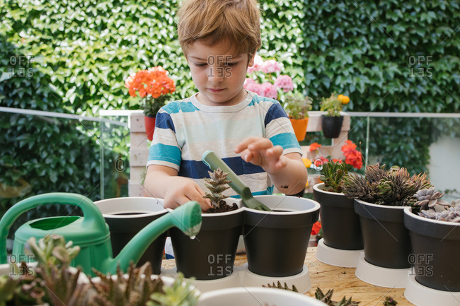 Adorable child in casual wear using plastic garden fork while loosening ground in pots with cacti standing behind blooming flowers and hedge in sunlight
