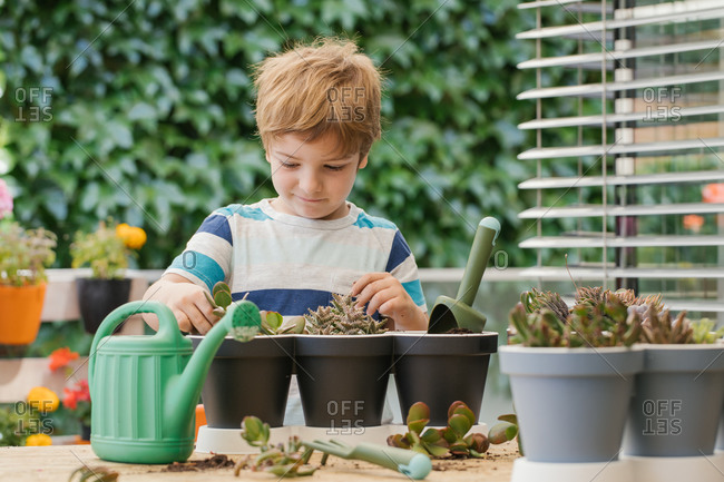 Adorable child in casual wear standing near similar pots while planting cactus into soil near watering can and trowel on wooden table