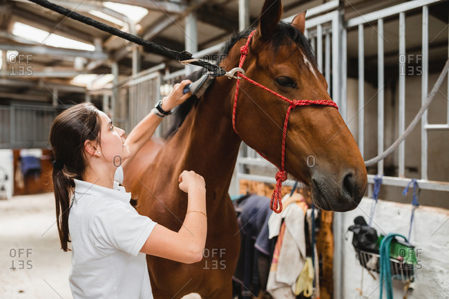 Side view of female equestrian standing in stable and grooming chestnut horse with brush