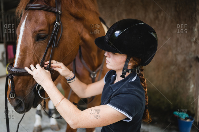 Side view of busy female equestrian in helmet standing in stable and preparing horse for training while putting bridle
