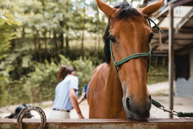 Back view of busy female rider standing near barn and grooming obedient horse with brush