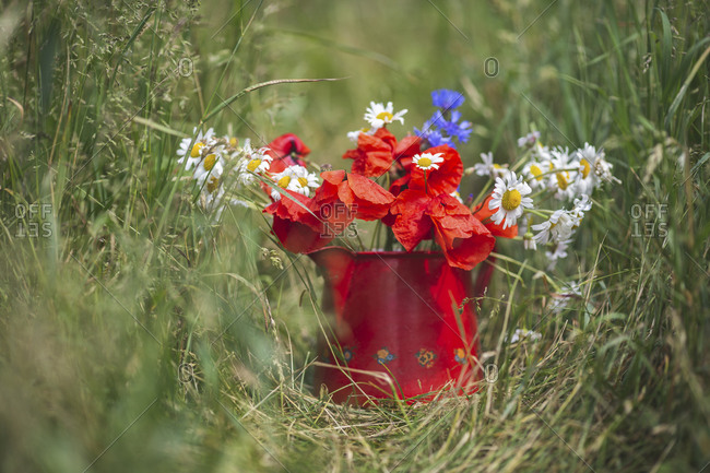 Jug full of freshly picked daisies and poppies
