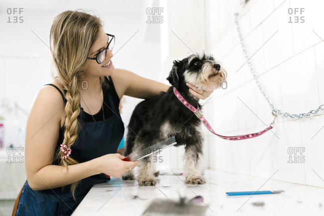 Smiling female groomer brushing schnauzer on table in pet salon