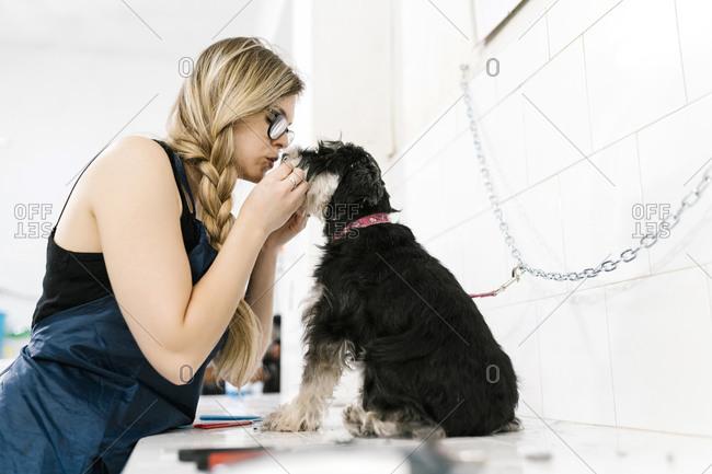 Female groomer loving schnauzer sitting on table in pet shop