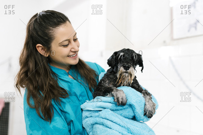 Smiling female groomer carrying wet schnauzer with towel while standing in pet salon