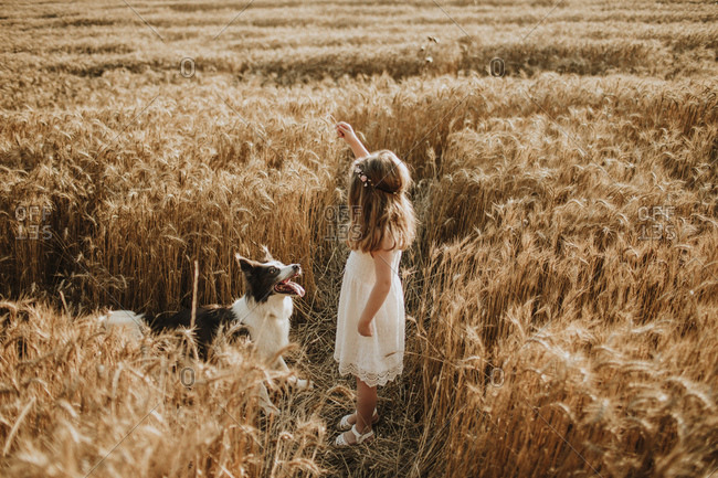 Girl playing in wheat field with border collie dog