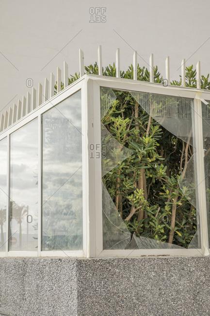Trees growing behind broken window