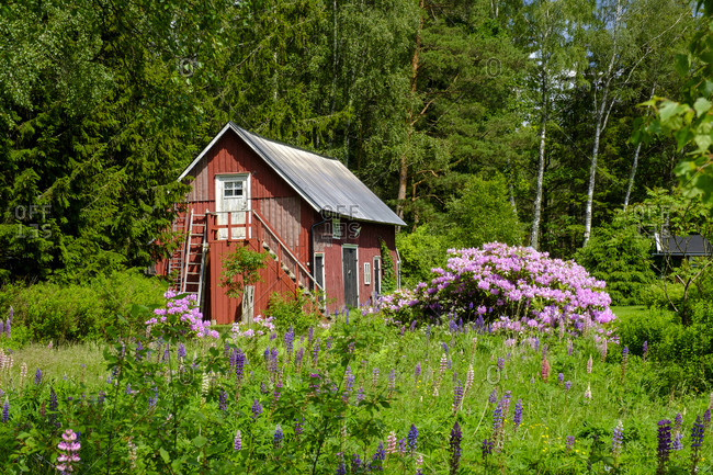 Flowers blooming in front of forest cottage
