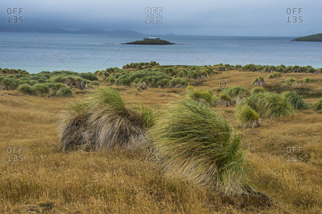 UK- Falkland Islands- Grassy coastline of Carcass Island