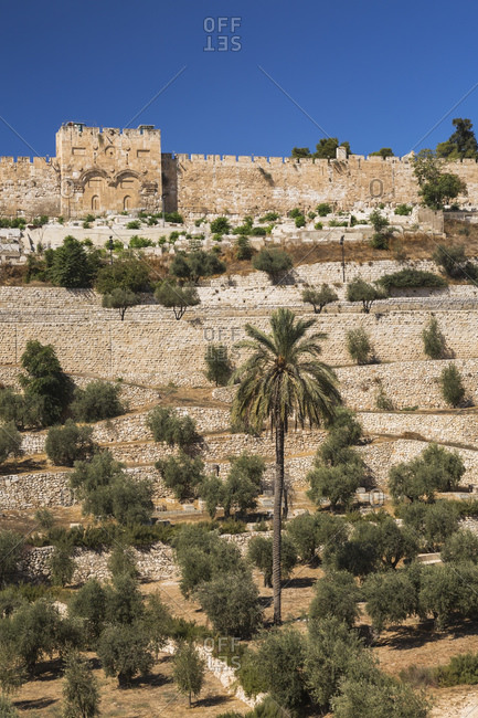 Cemetery with olive trees and fortified stone wall with Golden Gate, Old City of Jerusalem, Israel.