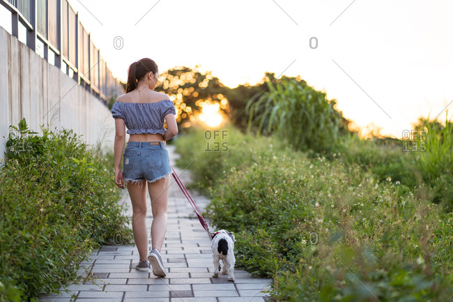 Back view of Asian female in casual wear strolling with American Cocker Spaniel on pathway between green grass under serene sky on sunny day