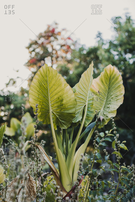 Green plant with thick stems and spiky leaves with ribbed surface growing in park surrounded by blooming trees under serene sky in daylight