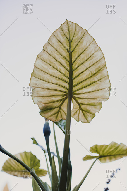 Green plant with thick stems and spiky leaves with ribbed surface growing against white sky in daylight