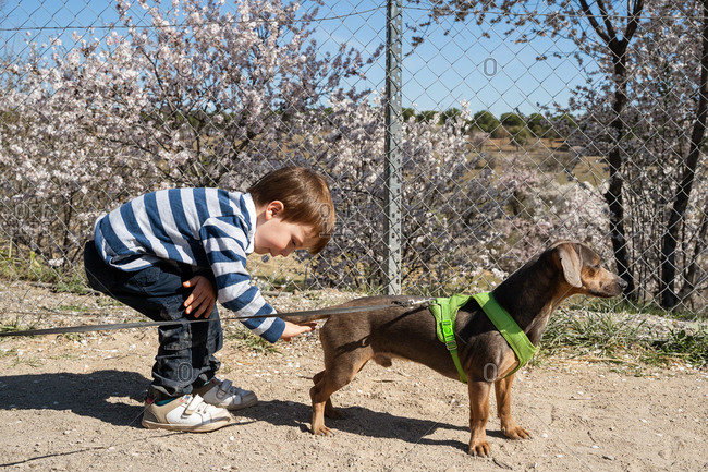 Side view of adorable child playing with cute little dog in park with blossom trees