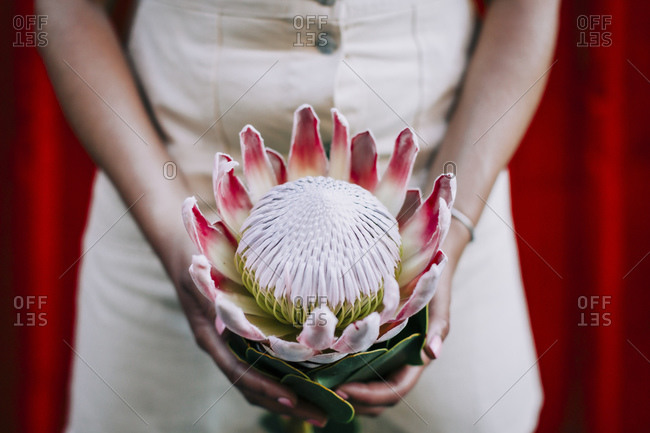 Young woman in front of red wall- holding protea flower- close-up