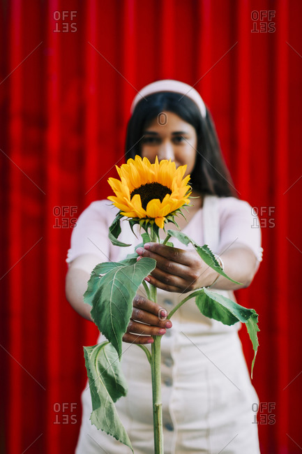 Young woman in front of red wall- presenting sunflower