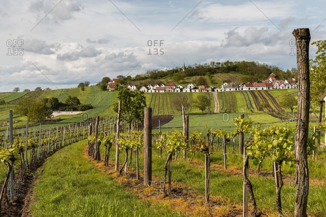 Wine cellars and vineyard above village of Galgenberg, Niederosterreich, Lower Austria, Austria, Europe