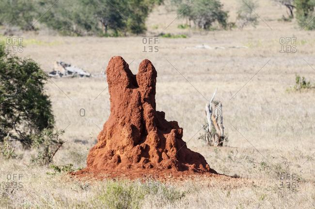 Termite Mound, Taita Hills Wildlife Sanctuary, Kenya, East Africa, Africa