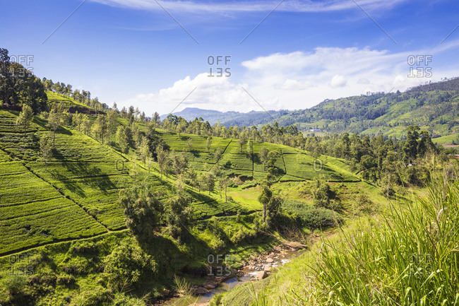 Tea Estate, Castlereagh Lake, Hatton, Central Province, Sri Lanka, Asia