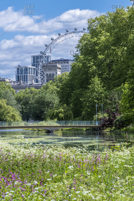 May 12, 2020: Spring flowers in the royal park with the London Eye and buildings on Whitehall, St. James's Park, Westminster, London, England, United Kingdom, Europe