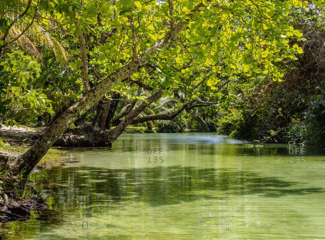 Frenchman's Cove River, Portland Parish, Jamaica, West Indies, Caribbean, Central America